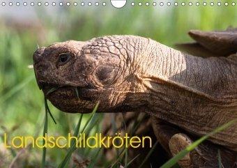 Landschildkröten (Wandkalender 2018 DIN A4 quer)